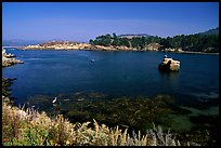 Whalers cove. Point Lobos State Preserve, California, USA