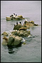 Rocks with birds and seals. Pacific Grove, California, USA