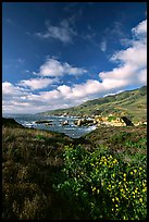 Wildflowers and coast, Garapata State Park, afternoon. Big Sur, California, USA (color)