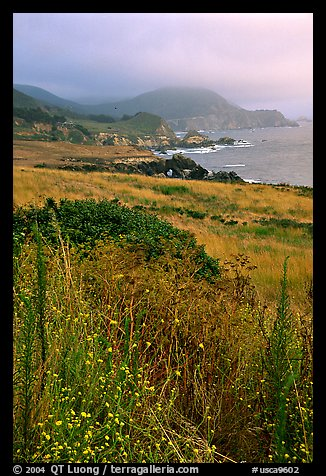 Summer grasses and fog near Rocky Point. Big Sur, California, USA (color)