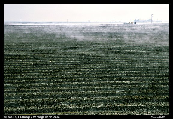 Mist and plowed field, San Joaquin Valley. California, USA (color)