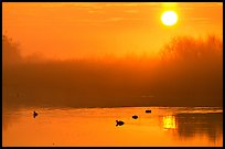 Sunrise, fog,  and water birds, Kern National Wildlife Refuge. California, USA