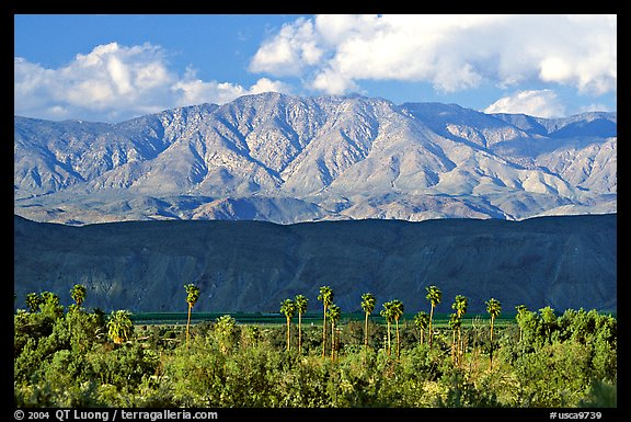 Palm Trees and mountains. Anza Borrego Desert State Park, California, USA
