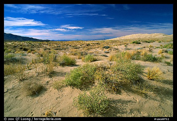 Bushes and Kelso Dunes. Mojave National Preserve, California, USA (color)