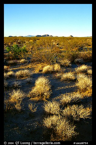 Sage bushes on flats. Mojave National Preserve, California, USA (color)