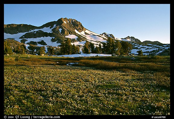 Meadow carpeted with flowers below Round Top Mountain. Mokelumne Wilderness, Eldorado National Forest, California, USA (color)