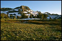 Meadow carpeted with flowers below Round Top Mountain. Mokelumne Wilderness, Eldorado National Forest, California, USA