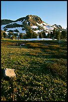 Meadow carpeted with flowers below Round Top Peak. Mokelumne Wilderness, Eldorado National Forest, California, USA