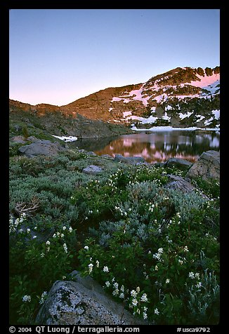 Flowers near Winnemucca Lake, sunset. Mokelumne Wilderness, Eldorado National Forest, California, USA