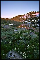 Flowers near Winnemucca Lake, sunset. Mokelumne Wilderness, Eldorado National Forest, California, USA (color)