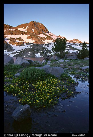 Flowers and Round Top Mountain, sunrise. Mokelumne Wilderness, Eldorado National Forest, California, USA (color)