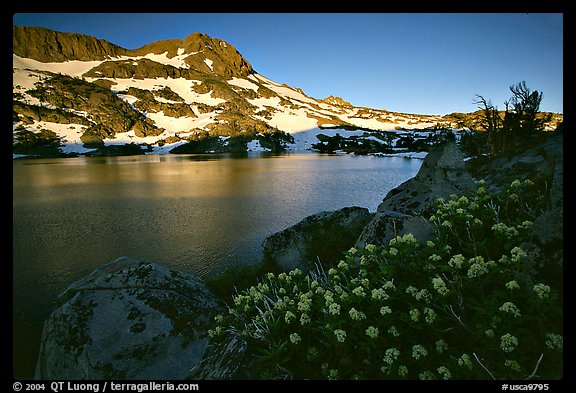 Flowers, Winnemucca Lake,  and Round Top Mountain, sunrise. Mokelumne Wilderness, Eldorado National Forest, California, USA (color)
