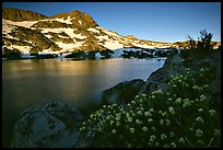 Flowers, Winnemucca Lake,  and Round Top Mountain, sunrise. Mokelumne Wilderness, Eldorado National Forest, California, USA