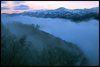 Fog and ridges, sunrise, Stanislaus  National Forest. California, USA ( color)