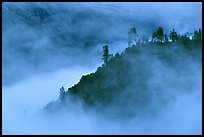 Trees and ridge in fog,  Stanislaus  National Forest. California, USA