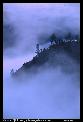 Ridge in fog,  sunrise, Stanislaus  National Forest. California, USA (color)