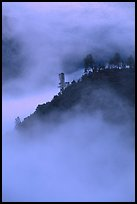 Ridge in fog,  sunrise, Stanislaus  National Forest. California, USA ( color)