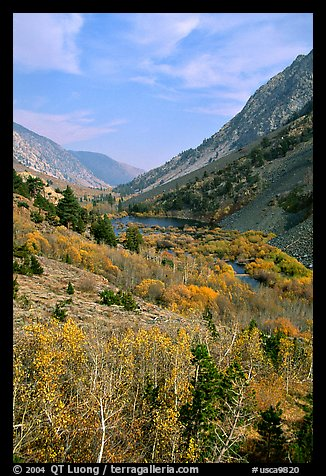 Lundy Canyon in the fall, Inyo National Forest. California, USA (color)