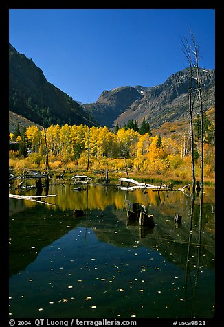 Pond and trees in autumn, Lundy Canyon, Inyo National Forest. California, USA (color)