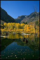 Pond and trees in autumn, Lundy Canyon, Inyo National Forest. California, USA