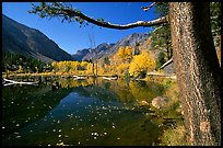 Pond and trees in fall colors, Lundy Canyon, Inyo National Forest. California, USA