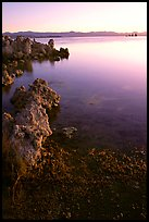 Tufas at sunrise. Mono Lake, California, USA ( color)