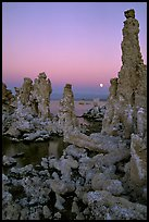 Tufa towers and moon, dusk. Mono Lake, California, USA (color)