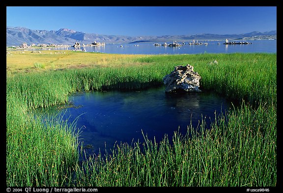 Grasses and spring with small tufa being formed underwater. Mono Lake, California, USA
