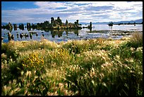 Grasses and Tufa towers, morning. Mono Lake, California, USA