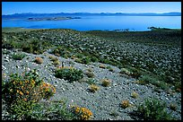 Lake seen from Mono crater. Mono Lake, California, USA