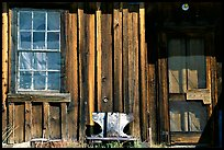 Window and wall, Ghost Town, Bodie State Park. California, USA ( color)