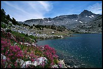 Indian Paintbrush and Saddlebag Lake, Inyo National Forest. California, USA