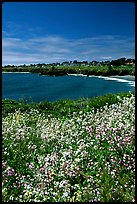 Spring wildflowers and Ocean, Mendocino in the background. California, USA (color)