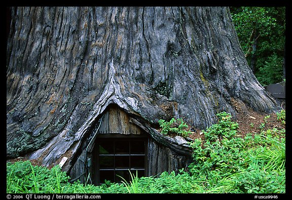 Tree Houses California California Usa Tree House