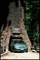 Van driving through the Chandelier Tree, Leggett, afternoon. California, USA ( color)