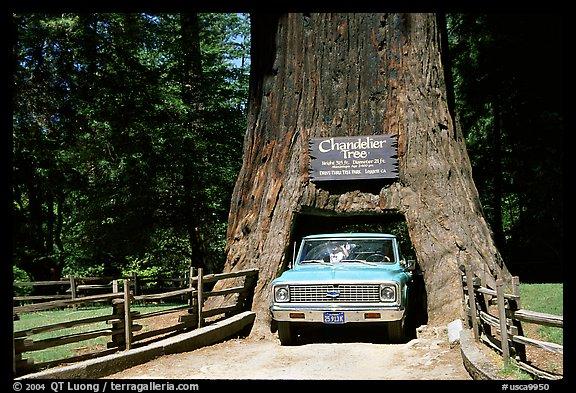 Picture/Photo: Truck driving through Drive-Through Tree, Leggett ...