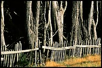 Old fence and trees, late afternoon. California, USA (color)