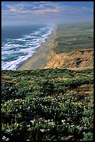 Point Reyes Beach, afternoon. Point Reyes National Seashore, California, USA ( color)