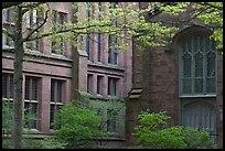 Old Campus buildings. Yale University, New Haven, Connecticut, USA (color)