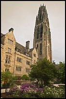 Harkness Tower. Yale University, New Haven, Connecticut, USA ( color)