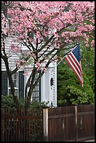 Tree in bloom, white facade, and flag, Essex. Connecticut, USA