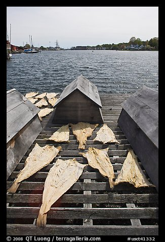 Fish being dried next to Mystic River. Mystic, Connecticut, USA (color)