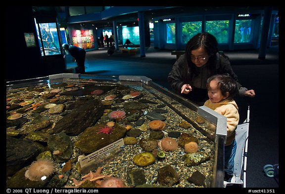 Picture Photo Tidepool Exhibit Mystic Aquarium Mystic