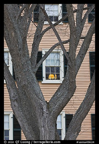 Tree and facade, Hawkes House, Salem Maritime National Historic Site. Salem, Massachussets, USA