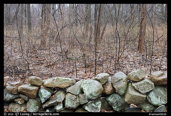 Stone wall and bare forest in winter, Minute Man National Historical Park. Massachussets, USA (color)