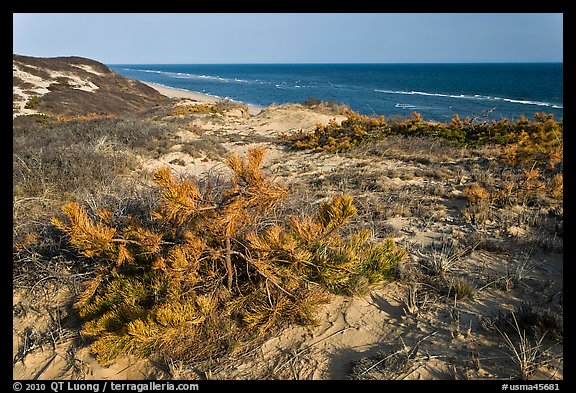 Vegetation on tall dune, Cape Cod National Seashore. Cape Cod, Massachussets, USA (color)