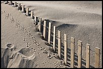 Sand, fence, and animal tracks, Cape Cod National Seashore. Cape Cod, Massachussets, USA (color)