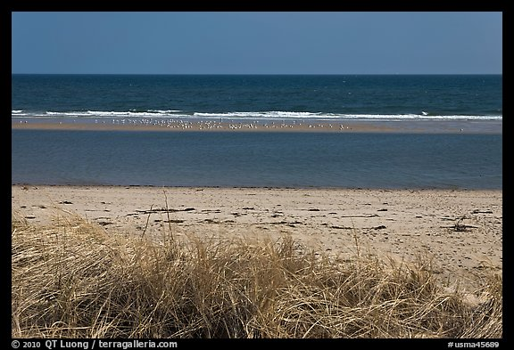 Grass, beach, and sand bar, Cape Cod National Seashore. Cape Cod, Massachussets, USA (color)