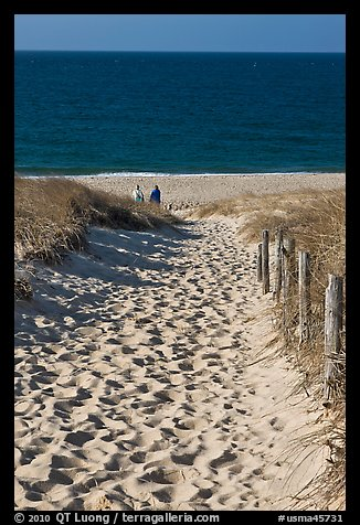 Path to ocean through dunes and tourists, Cape Cod National Seashore. Cape Cod, Massachussets, USA (color)