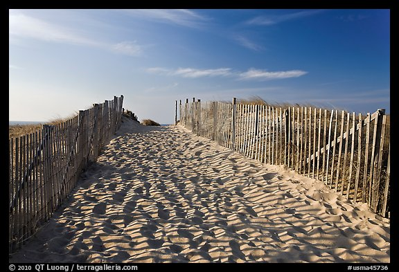 Path between sand fences, Cape Cod National Seashore. Cape Cod, Massachussets, USA (color)